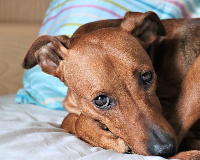 ¿Por qué mi perro lame sus patas o las muerde?